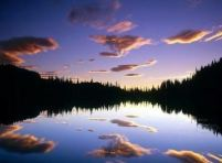 subdued reflection